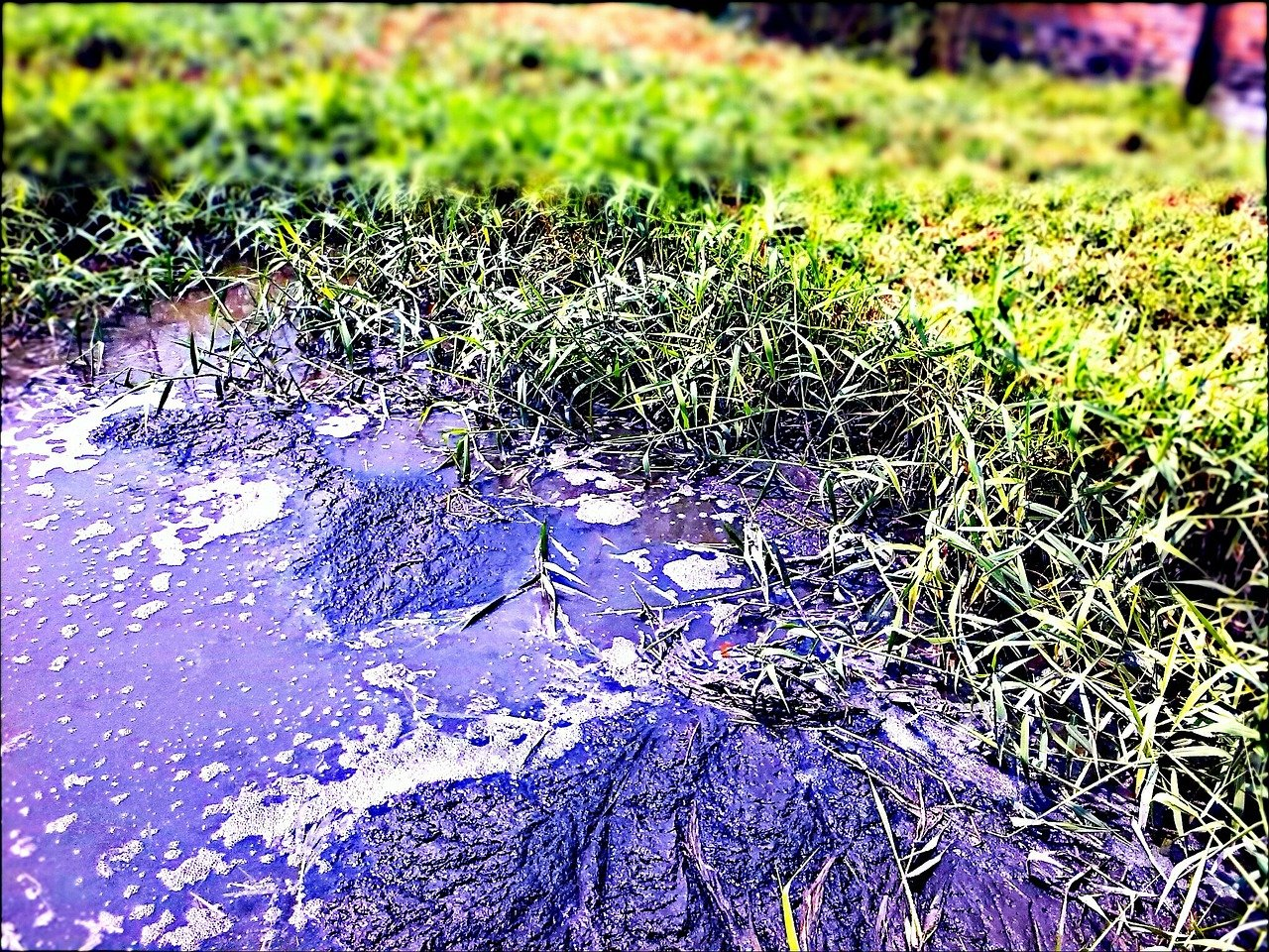 pond water polluted by sewage